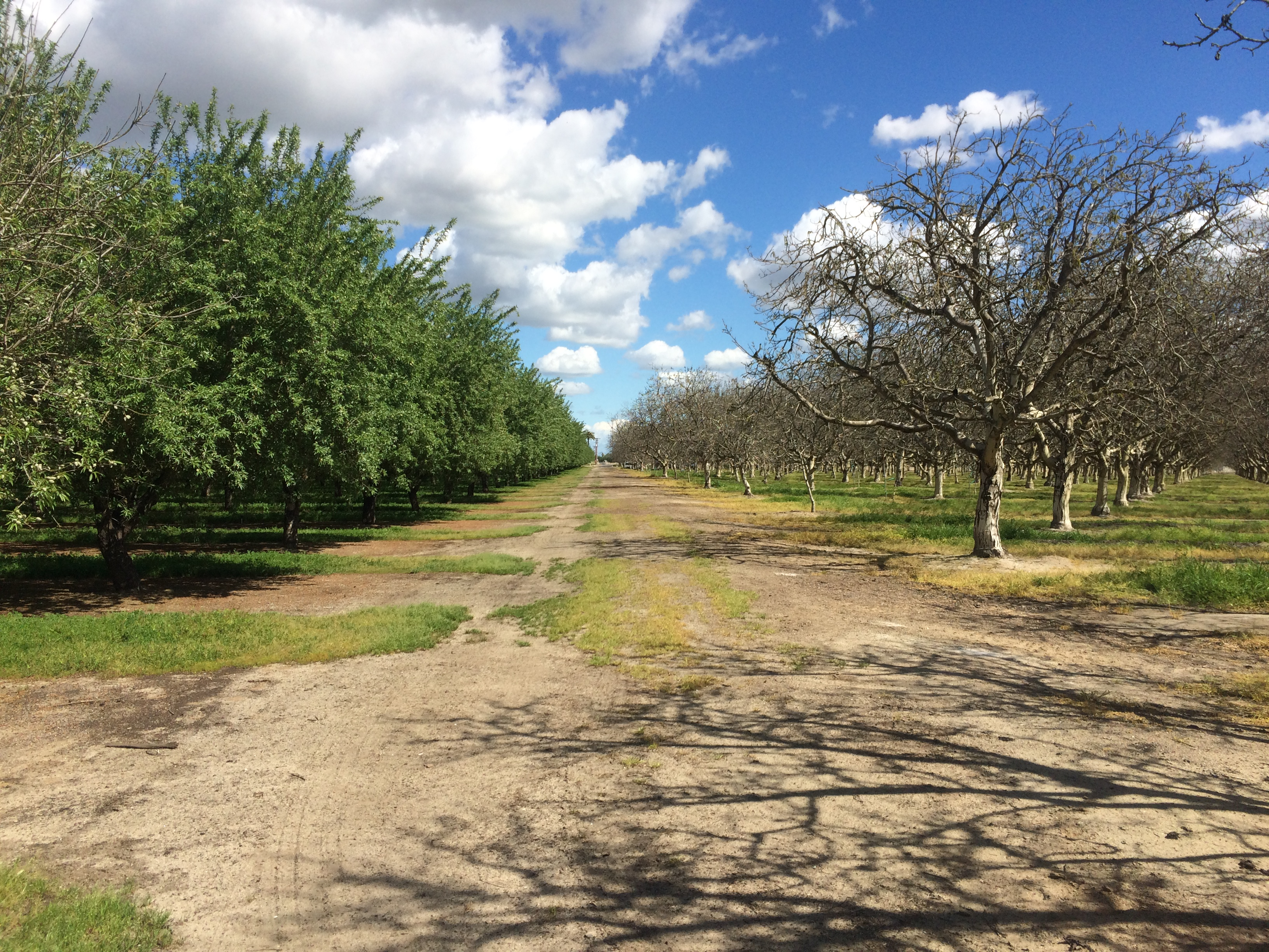 Almonds and Walnuts in May